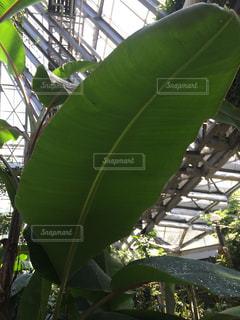 自然,屋内,植物,水滴,葉,温室,みどり,植物園,しずく