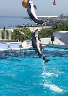 海,イルカ,水,ジャンプ,水滴,水しぶき,イルカショー,ダイナミック,哺乳類,しずく,迫力,みさき公園,演技