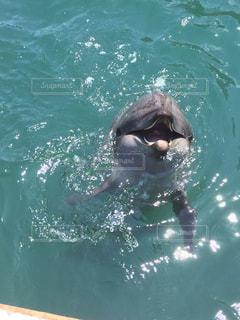 海,イルカ,水,癒し,可愛い,波紋,哺乳類,クジラ博
