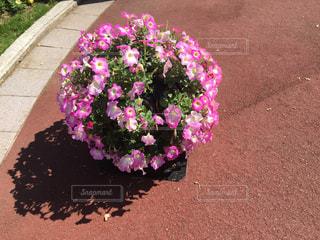 風景,花,春,オシャレ,可愛い,flower,まん丸
