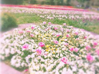 春爛漫の写真・画像素材[2125750]