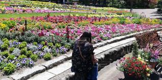 花,春,屋外,後ろ姿,人物,人,座る,植物園,後ろ,自分