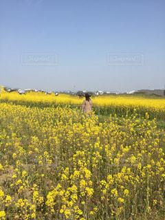 女性,自然,花,春,屋外,後ろ姿,黄色,菜の花,爽やか,人物,人,後ろ,囲まれて,藤原京跡地
