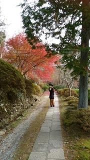 女性,秋,紅葉,後ろ姿,人物,人,お寺,後ろ,参道