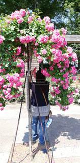 女性,風景,公園,花,後ろ姿,バラ,薔薇,人物,人,後ろ