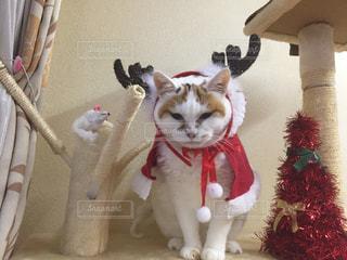 我が家の猫トナカイの写真・画像素材[2173811]