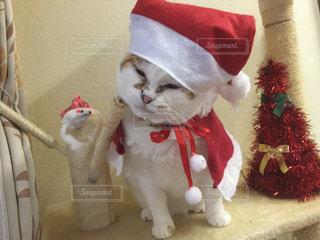 我が家の猫サンタの写真・画像素材[2173816]