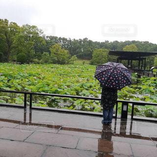 雨も好きの写真・画像素材[2259093]