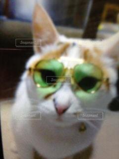 ちょい悪猫の写真・画像素材[2291964]