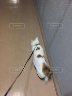 散歩の写真・画像素材[2515133]