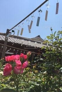 風鈴と花の写真・画像素材[3479462]