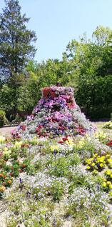 ラブリーな春の写真・画像素材[4342227]