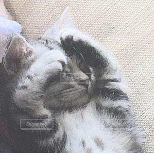 横になって、カメラを見ている猫 - No.718017