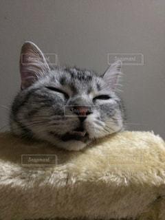 横になって、カメラを見ている猫 - No.718024