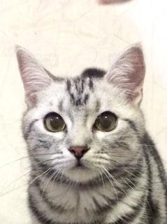 カメラを見ている猫 - No.724201