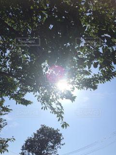 近くの木のアップ - No.724211
