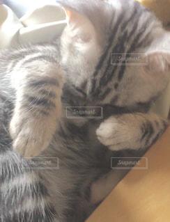 横になって、カメラを見ている猫 - No.726905