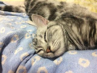 ベッドの上で横になっている猫 - No.740258