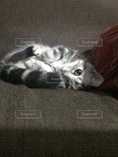 ベッドの上で横になっている猫 - No.750720