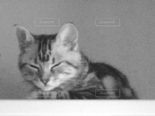 横になってる猫 - No.821041