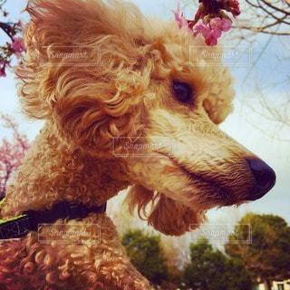 犬の写真・画像素材[20125]