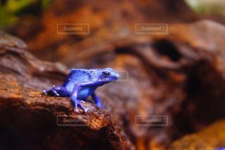 岩の上に座っているカエルの写真・画像素材[722569]