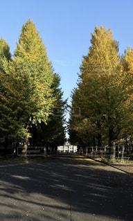 通り側の木と空の道 - No.849382