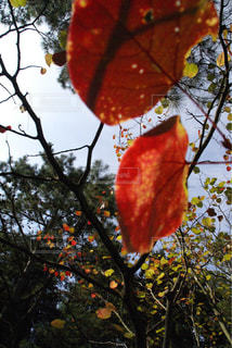 紅葉したカラフルな葉っぱの写真・画像素材[894252]