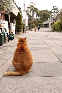 猫の道 - No.894277
