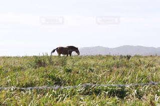 緑豊かな緑のフィールドで動物立って - No.895628
