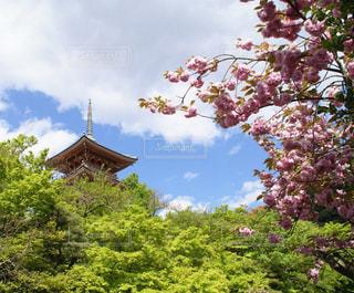 京の五月晴れ - No.931814