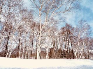 青空と樹木のスキー場の写真・画像素材[931824]