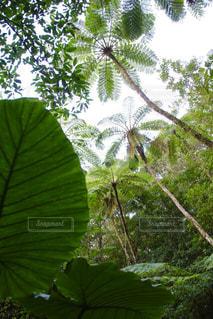 大きな緑の木の写真・画像素材[1030794]