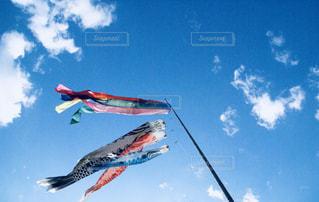 空を泳ぐ鯉のぼりの写真・画像素材[1101123]