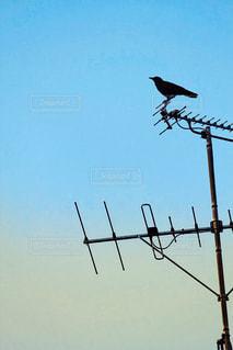 アンテナと鳥のシルエットの写真・画像素材[1351905]