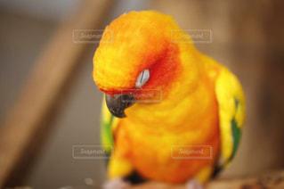 近くに鳥のアップの写真・画像素材[739252]