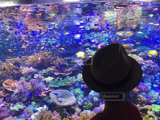 珊瑚礁の写真・画像素材[718044]