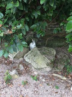 岩の上に横になっている猫の写真・画像素材[726203]