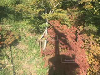 ロープウェイからの秋の写真・画像素材[799560]