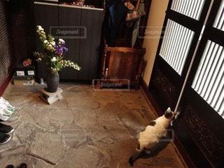 猫の写真・画像素材[11624]