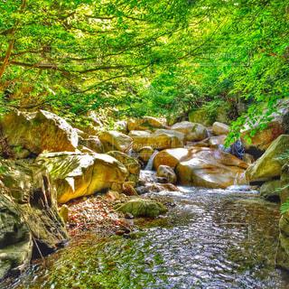 川の側の木と滝の写真・画像素材[766086]