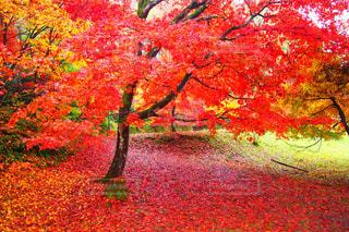 フィールドの真ん中の木の写真・画像素材[844428]