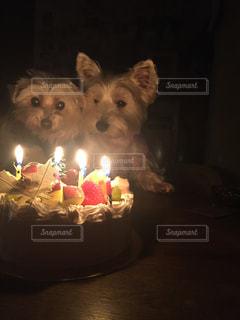 キャンドルとバースデー ケーキの前に座っている犬の写真・画像素材[934837]