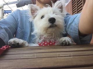 犬のベンチに座っている女性の写真・画像素材[1002542]