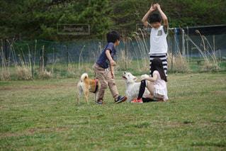 犬と子供の写真・画像素材[1171734]