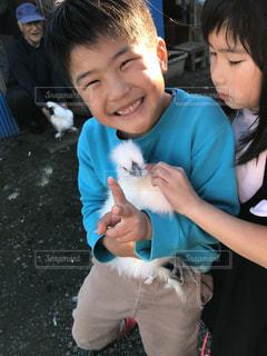 子供と烏骨鶏の写真・画像素材[1594904]
