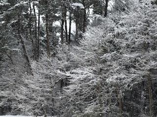 フォレスト内のツリーの写真・画像素材[1672440]