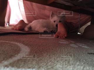 ベッドの上で横になっている猫の写真・画像素材[1783975]