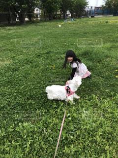 犬,公園,春,散歩,女の子,蝶,虫とり,ウエスティ