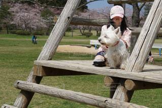 犬の写真・画像素材[2057222]